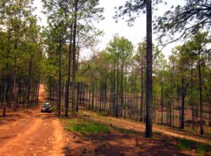 parchi nazionali in cambogia 2