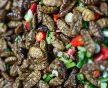 10 piatti a base di insetti da mangiare in Cambogia!