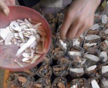 La medicina tradizionale in Cambogia, una cultura che scompare?